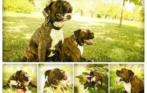 Sesion de belleza de perros