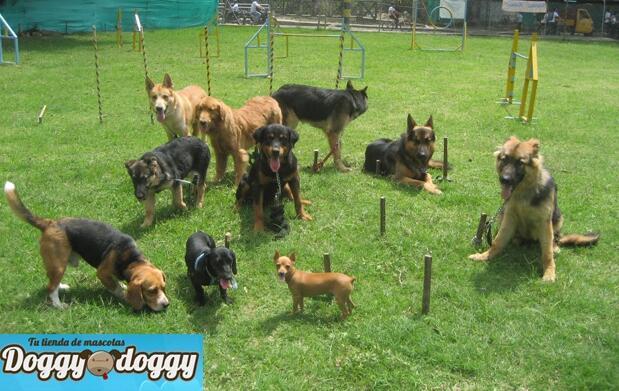 Taller de iniciación de educación canina
