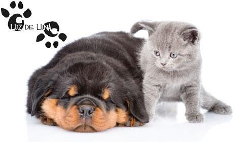 Revisión + vacuna de la rabia + desparasitación para perros y gatos