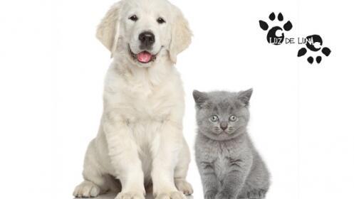 Baño para perro o gato, con opción a corte de pelo y uñas