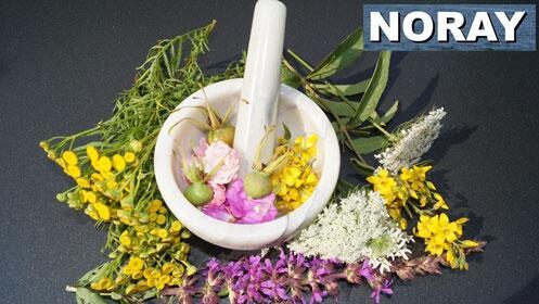Cuida de tu salud con remedios naturales